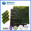Yaki Nori Roasted Seaweed,algae,sushi nori