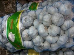 new garlic crop/alho/ajo/chino ajo