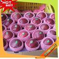 Frutas profissional fornecedor de polpa de frutas embalagem