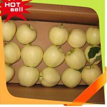 Professional Fruit Supplier fruit mango importers