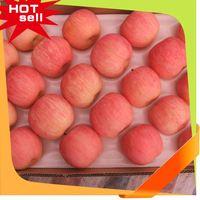Professional Fruit Supplier fruit picture frame