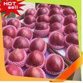 De la fruta profesional proveedor frutas tropicales nombres 2014