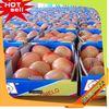 Professional Fruit Supplier sky fruit malaysia 2014