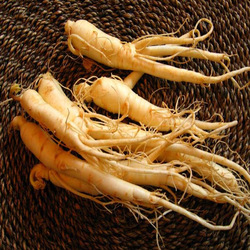 supply low Pesticide residuesGinseng extract ginseng saponins