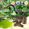 Raw Geosaurus, Crude Natural High quality Earthworm,Lumbricus, Pheretima