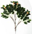 أسماء النباتات الاصطناعية من الفاكهة الحمراء