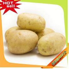 NEW CROP!!! Cheap Prices france potato