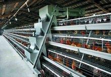 pollo la puesta de huevos de la máquina de la agricultura de codorniz