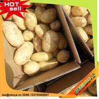 NEW CROP!!! Cheap Prices potato exporter association 2014 wholesale