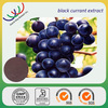 Natural dietary nutritious supplements antioxidant blackcurrant extract with 10%-25% anthocyanidins