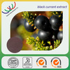 GMP factory hot sale Natural antioxidant blackcurrant extract powder with anthocyanidin 10%