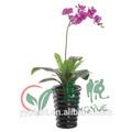0243 hermosas orquídeas plantas naturales