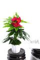 artificial de plantas de flores naturais secas