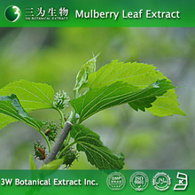 100% Pure Mulberry Leaves Extract 1% 1-DNJ from 3W Botanical