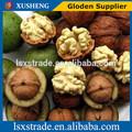 100% natürliche Walnüsse/nussbaum Fleisch/Sperma juglandis( b)