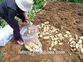 2014 cultivos fresco crujiente de patata con buena calidad y precio barato