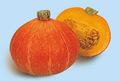 Fabricante chino natural de semillas cushaw/semen cucurbitae/de semilla de calabaza extracto