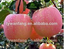 Wholesale Prices Fresh Fuji Apple Fruit ,Erve Trading Enterprise