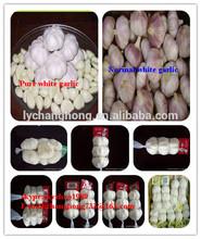 Chinese fresh garlic for sale in jinxiang2014 new corp jining shandong