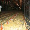 layer kenya chicken farm hot sale layer poultry battery cages layer kenya chicken farm hot sale layer poultry battery cages
