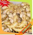 bas prix fabricant professionnel variétés de mangues indiennes dernier gros