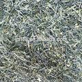 le bon goût de thé vert sencha biologique