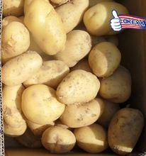 Okeya Plant Base pringles potatoes