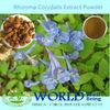 Hot Sell Natural Rhizoma Corydalis Extract Powder/Rhizoma Corydalis Extract/Rhizoma Corydalis Powder