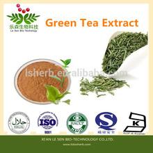 USP standard Natural Organic Green Tea Extract Polyphenols 95~98% EGCG 40%~98%