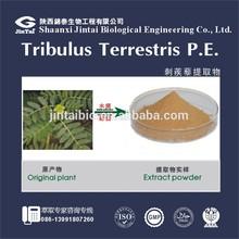 Natural Tribulus Terrestris extract Saponins 40%