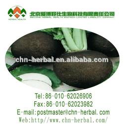 Black Radish Extract Arctiumlappa L.bacterial anti-cancer Black Cohosh
