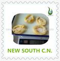 decilious abalone enlatados em salmoura para frutos do mar restaurante