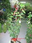 SJN033 120CM 95 leaves 4 fruits artificial Vine grape plants make cheap rubber bonsai tree plants for decor