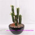 lxy072510 ornamentais plantas artificiais decorativas fake plantas em vasos e vaso de planta artificial baratos artificial cacto