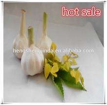 2014 organic fresh garlic