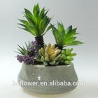 2014 new arrival ceramic pot plant for decorating