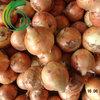 Yellow Fresh Onion China Factory