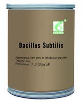 Bio-pesticide Bacillus subtilis fermentation