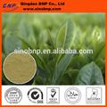gmp certificada forma en polvo extracto de té verde cápsula