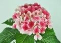 ترتيبات الزهور الأعراس الحياة-- مثل الديكور والجدول الزفاف الزهور الكوبية