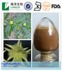 free sample plant extract tribulus terrestris Saponins 20-98%