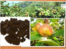tea seed flake - natural organic tea seed slice