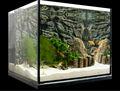 una buena visión del tanque del acuario
