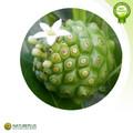 Natural Noni fruits extrait / Morinda citrifolia extrait poudre / Noni extrait made in china