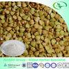 High Quality Tartary Buckwheat Extract, Rutin 80%