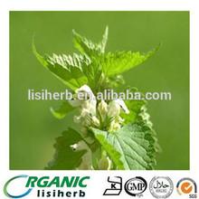 Nettle P.E / Urtica dioica / smartweed / CAS NO.: 84012-40-8