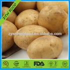 Potato Wholesale Price Mesh Bags Good Taste For Export