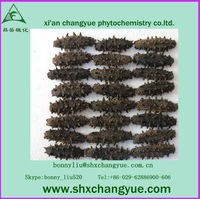 factory price sea cucumber extract