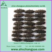 factory price sea cucumber extract