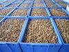 Broken size Walnut kernel price